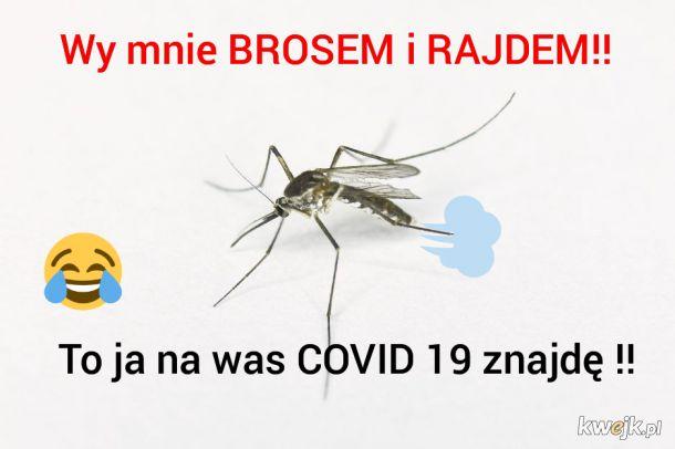 Komary nadchodzą!!!