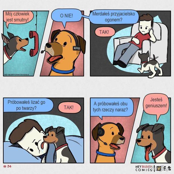 Oto komiksy zainspirowane przez psa, z którymi może się utożsamiać większość właścicieli psów, obrazek 4
