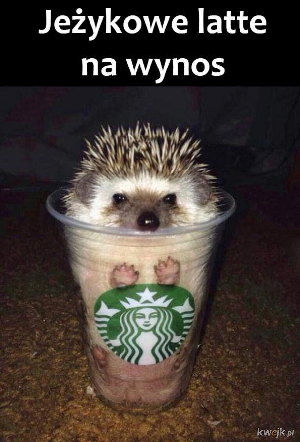 Jeżykowe latte