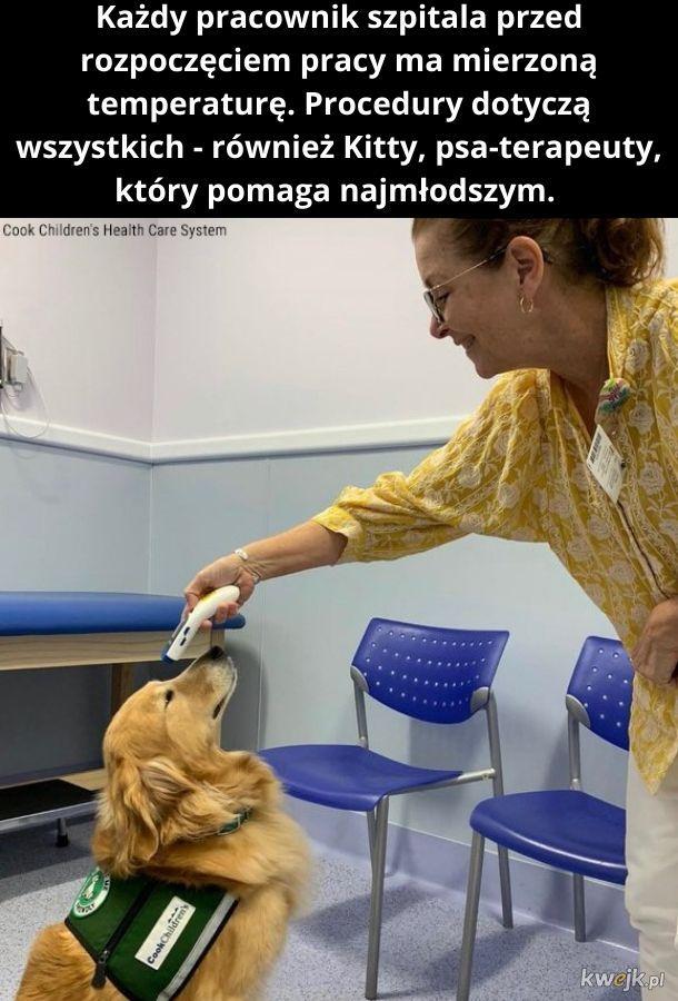 Kitty - cóż za absurdalne imię dla psa. Choć spotkałem kiedyś kota o imieniu Michał. To było dziwniejsze.