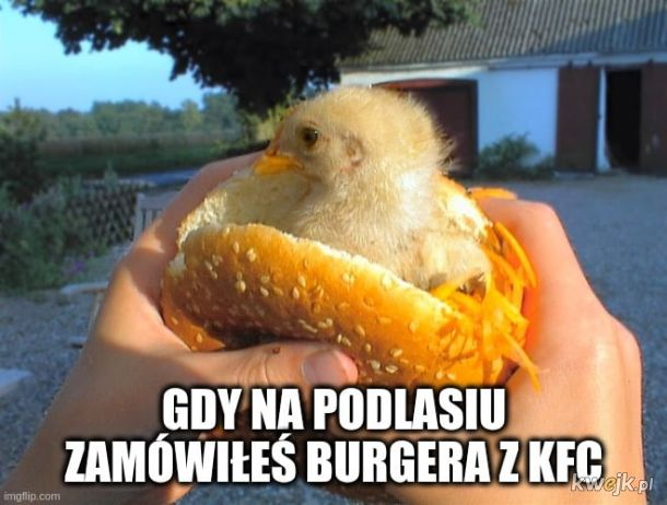 Burger na Podlasiu