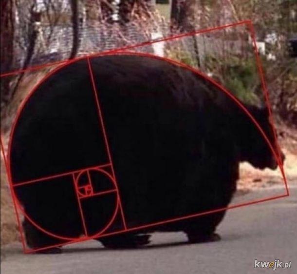 Miś Fibonacciego