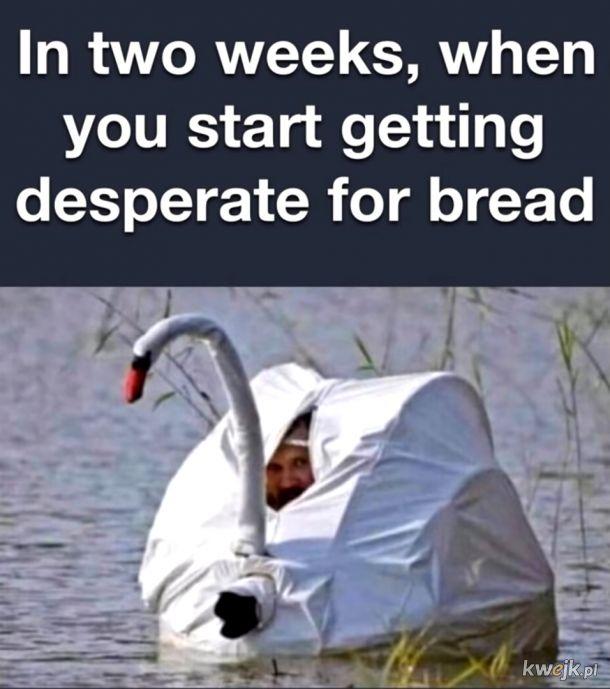 daj chleba znaczy... kwa kwa