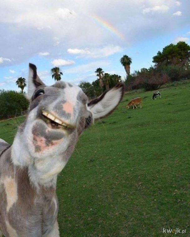 Patrzenie się na te zwierzaki grozi poprawą humoru na resztę dnia