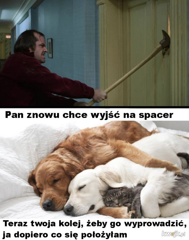 Pan chce na spacer