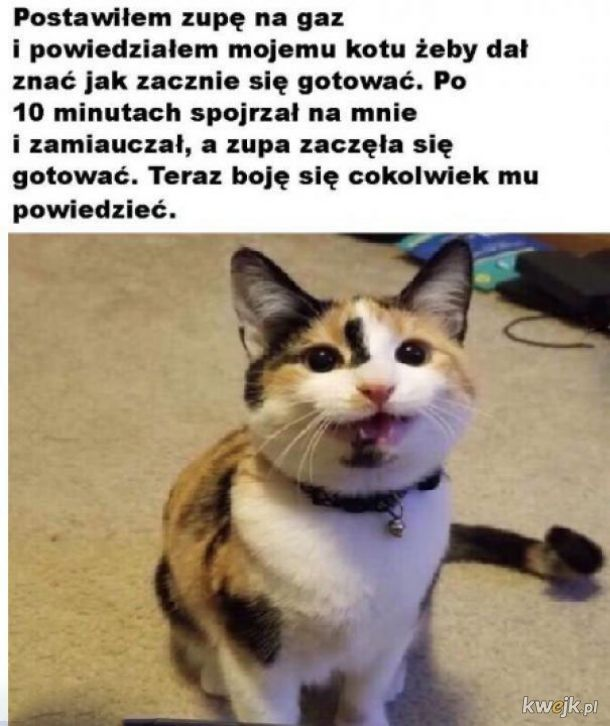 Boję się kota