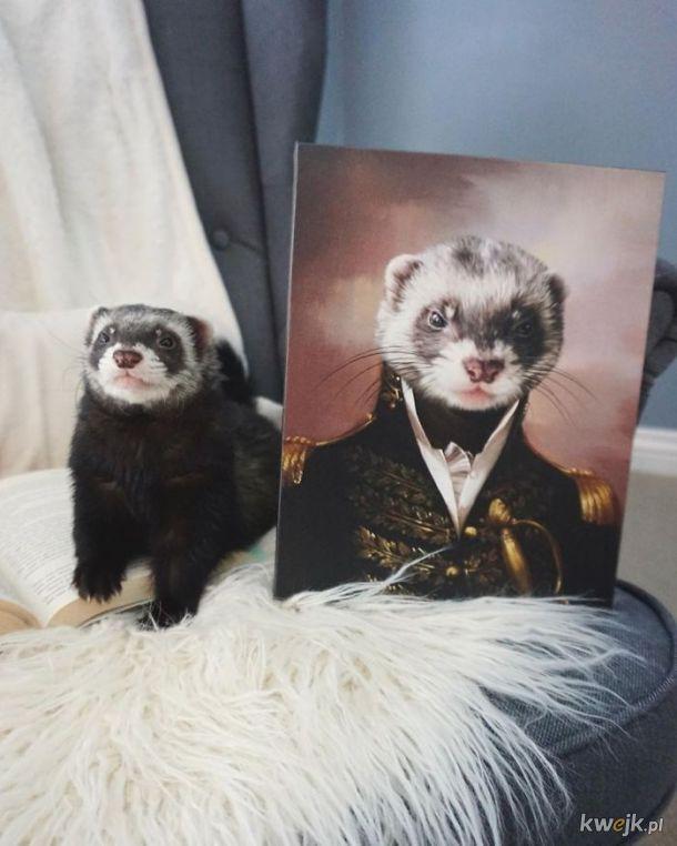 Zwierzęta i ich portrety królewskie, obrazek 12