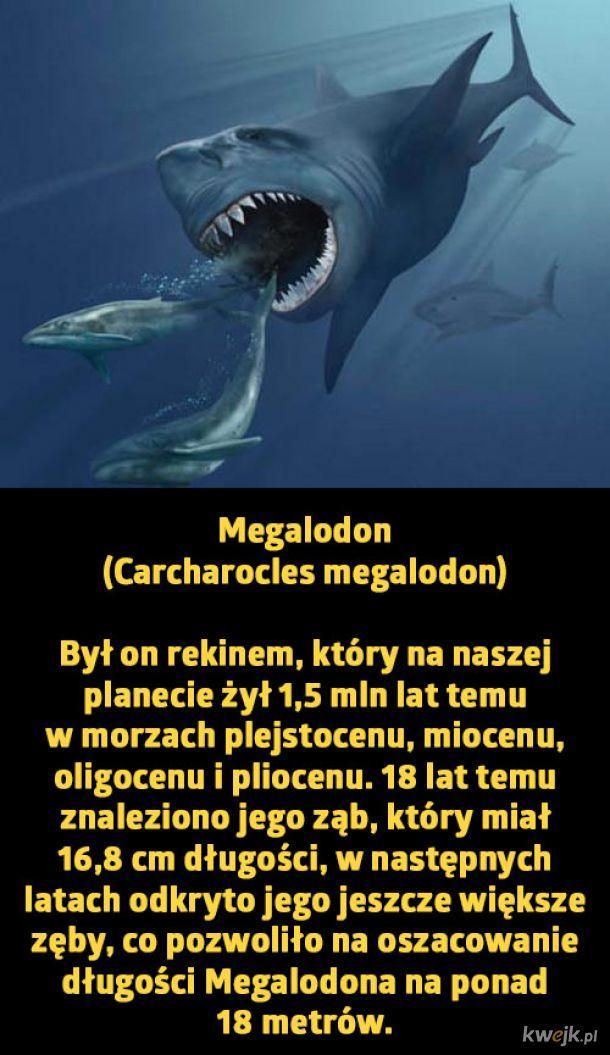 Największe zwierzęta, które istniały i istnieją na naszej planecie