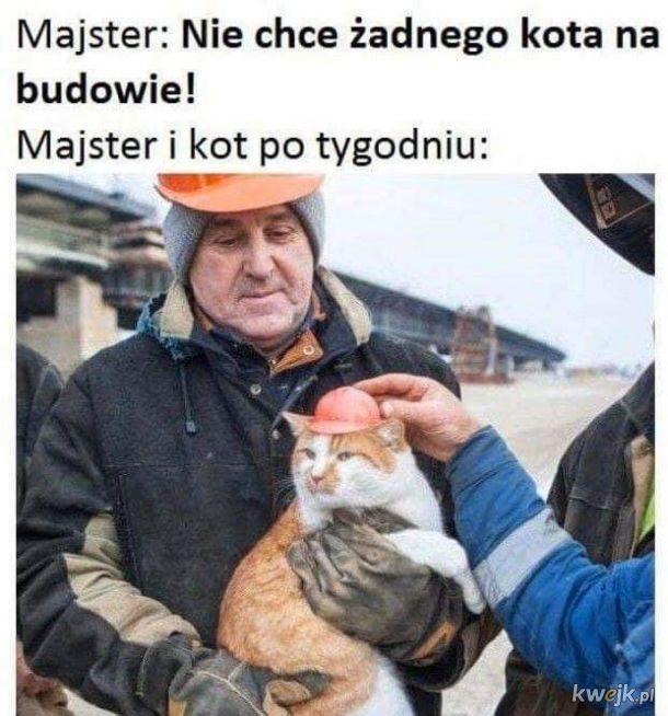 Typowy majster