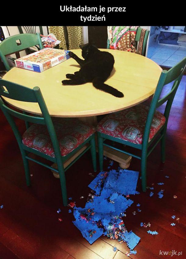 Koty i puzzle to kiepskie połączenie