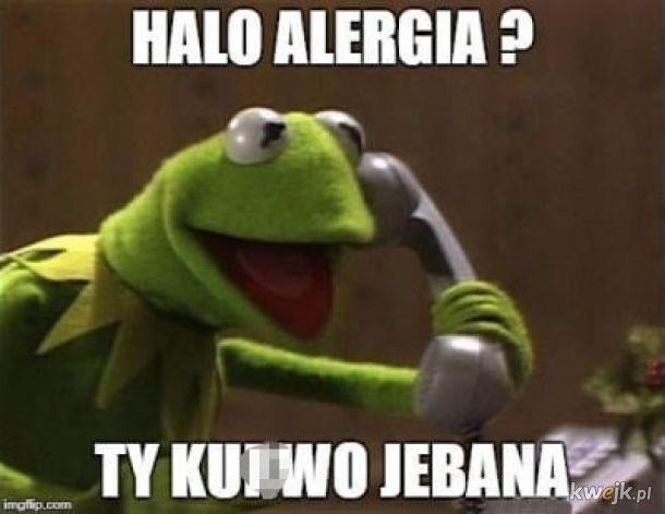 Memy dla alergików