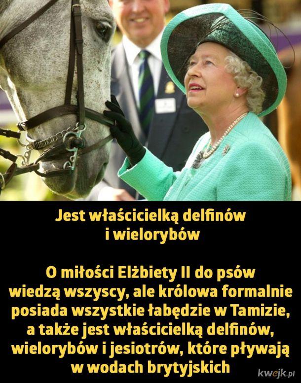 Dziwne przywileje Królowej Elżbiety II., obrazek 4