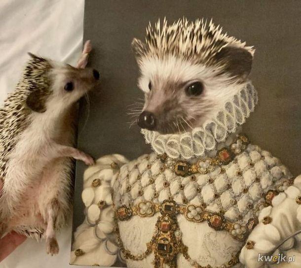 Zwierzęta i ich portrety królewskie, obrazek 5