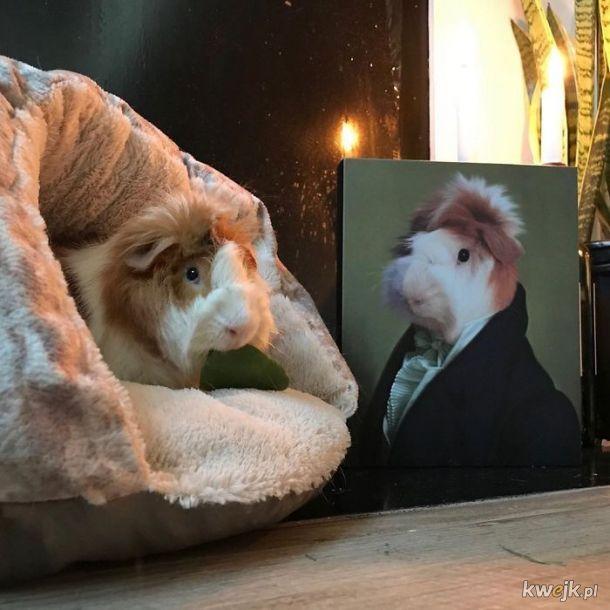 Zwierzęta i ich portrety królewskie, obrazek 9