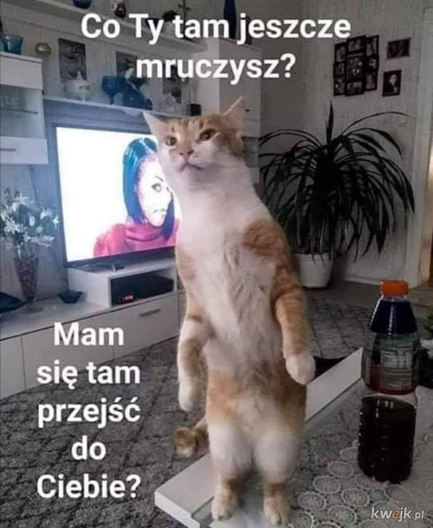 Nie wkurzaj kota