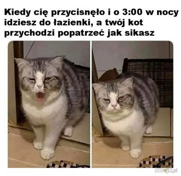 Kot towarzysz