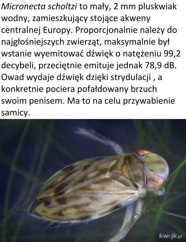 Czwartek z owadzią ciekawostką #2