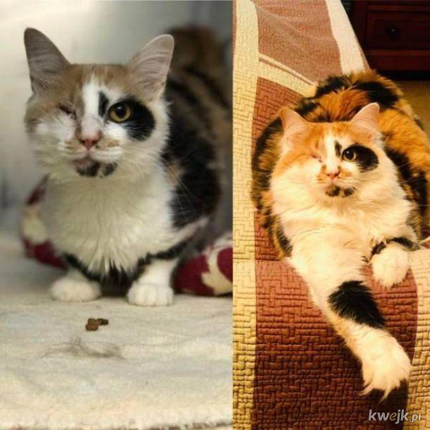 Z kupki nieszczęścia w masę radości - zobacz jak zmieniły się zwierzęta po tym jak trafiły do dobrych ludzi, obrazek 5