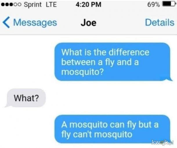 Mucha nie może komara
