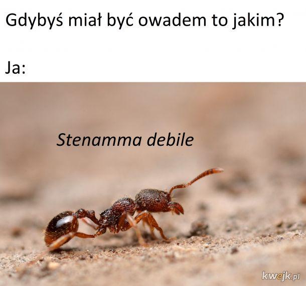 A Ty jakim owadem byś był?