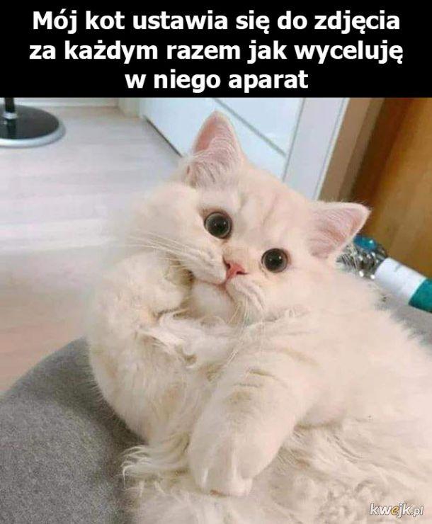 Mój kotek