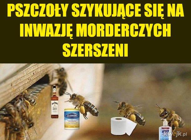 Pobieranie miodu za wynajem uli zostanie wstrzymane