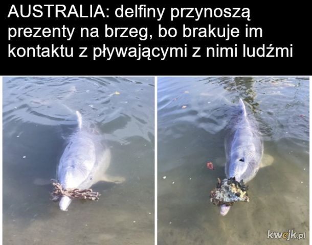 Stęsknione delfinki