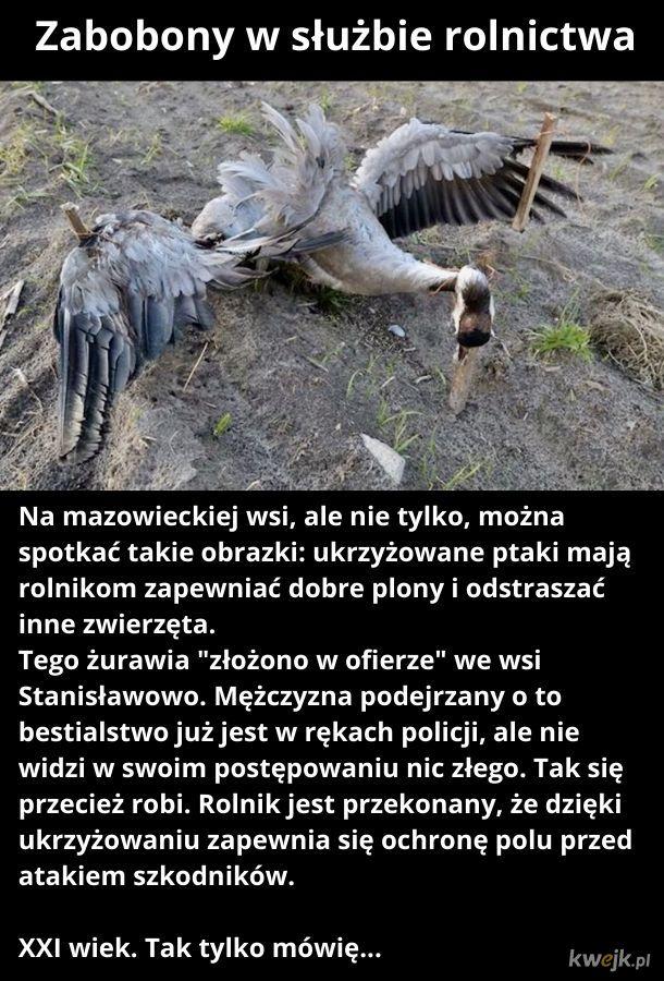 Polska. 2020 rok.