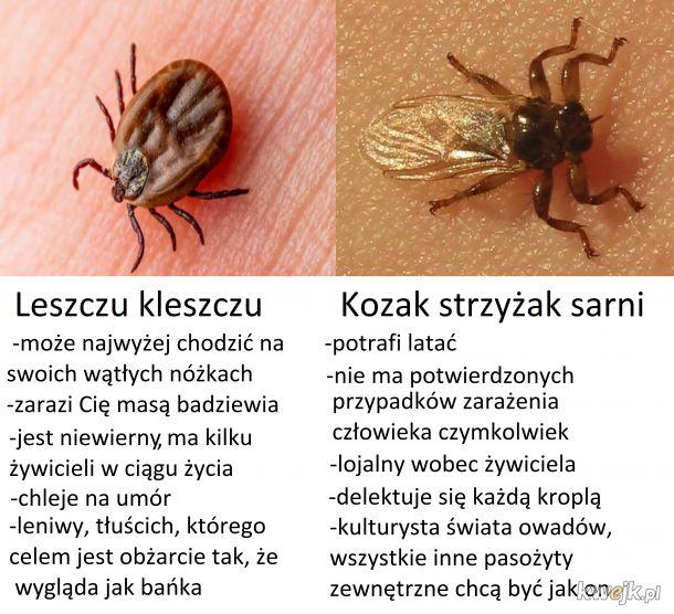 Strzyżak>Kleszcz