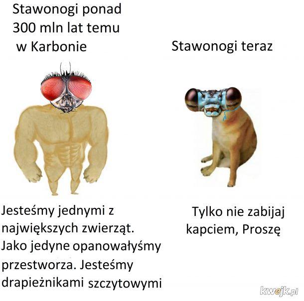 Stawonogi