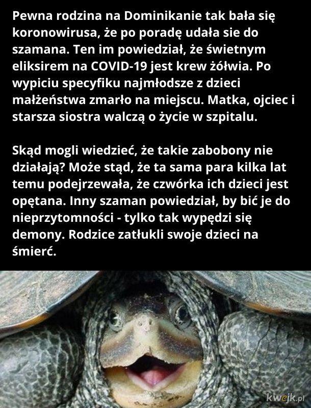 Podobno walnięcie się w pusty łep lepiej działa niż krew żółwia
