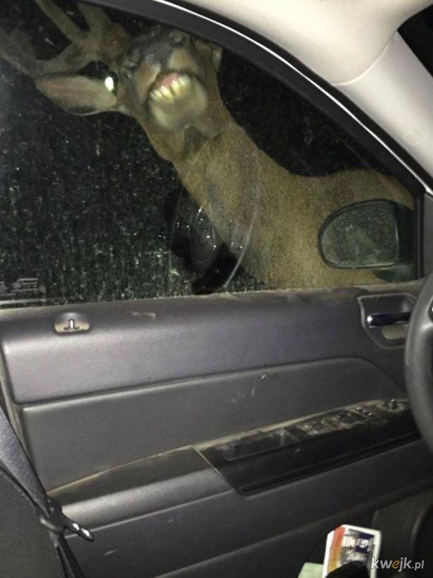 Zwierzęta robią (głupie) rzeczy
