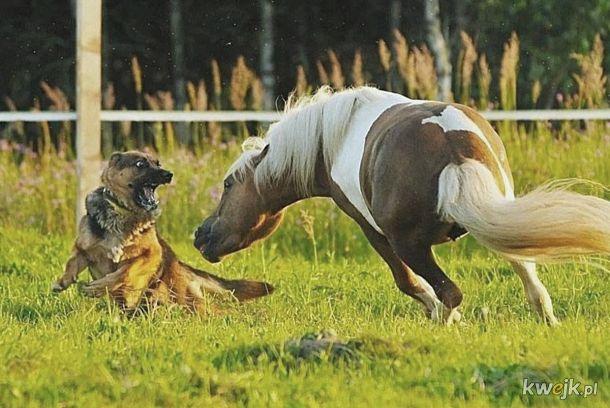Spadaj z tym swoim głupim pieskiem, bo poszczuję cię moim koniem obronnym!