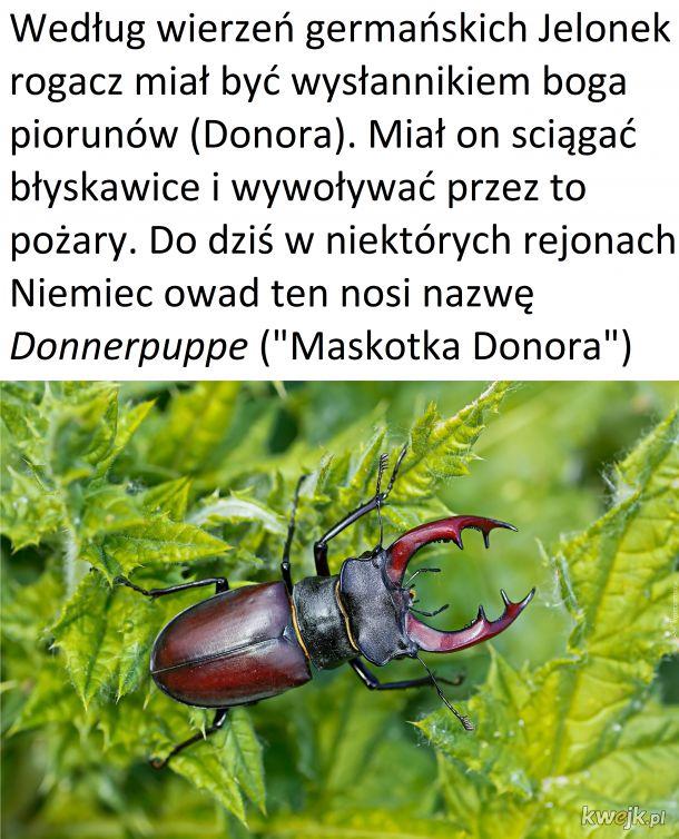 Czwartek z owadzią ciekawostką #3