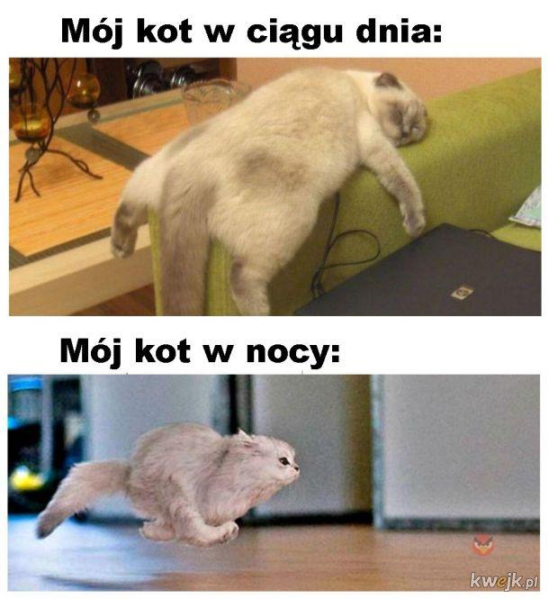 Kot w nocy