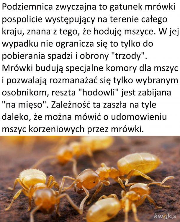 Czwartek z owadzią ciekawostką #1