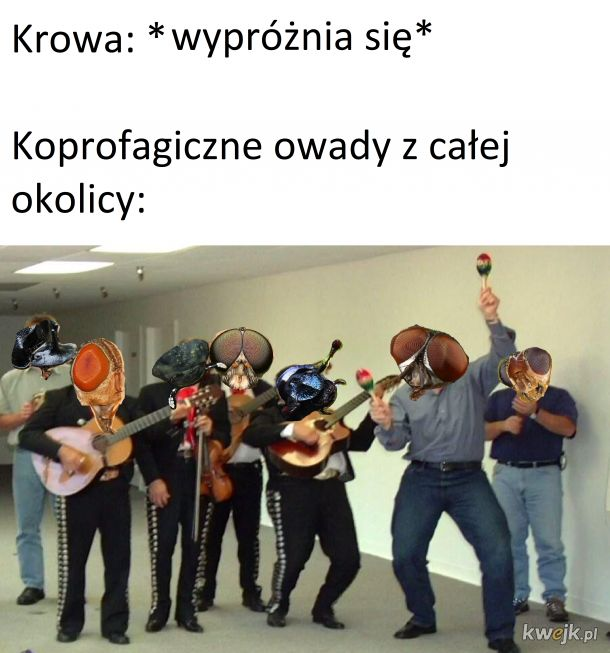 Koprofagi