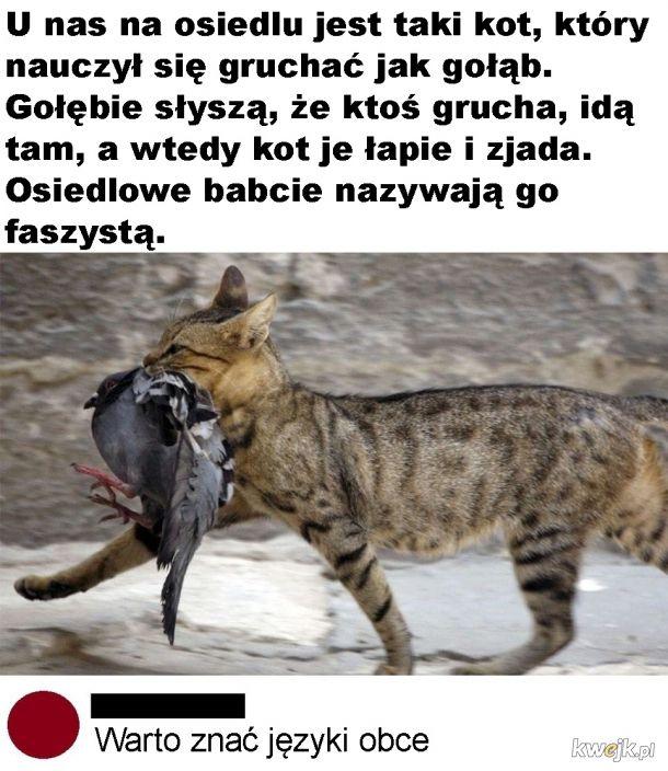 Kot faszysta