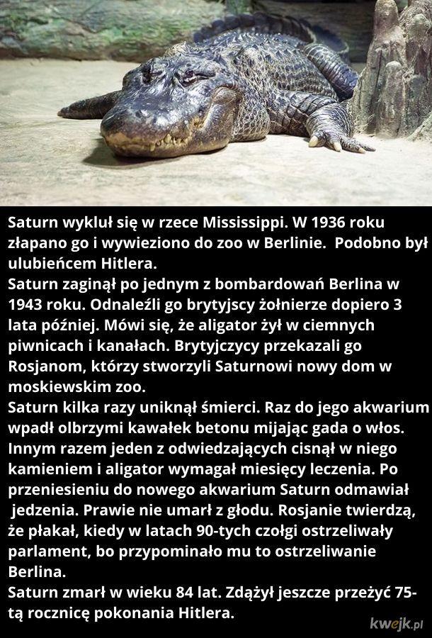 Nie żyje aligator Hitlera