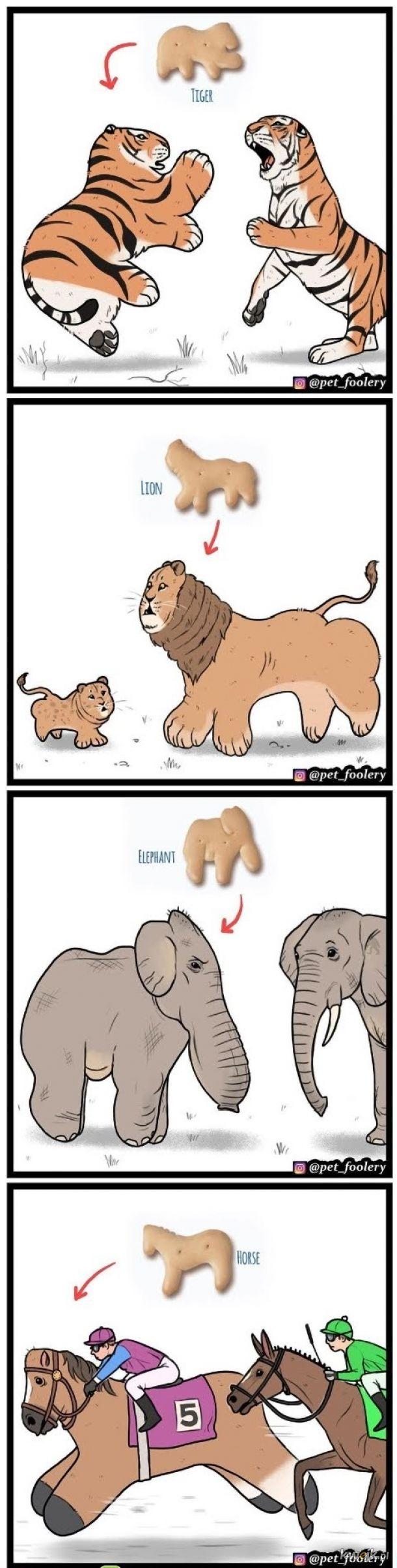 Ciasteczka zwierząt