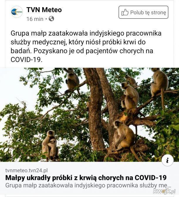 Planeta Małp. Czerwiec jest kreatywny