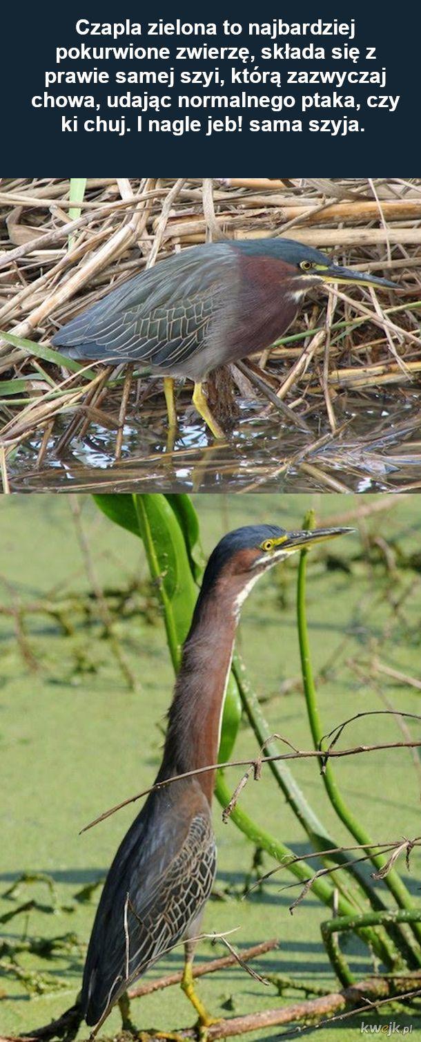 Zoologia ptaków