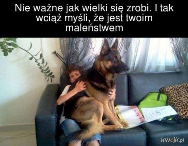 Posiadacze psów zrozumieją