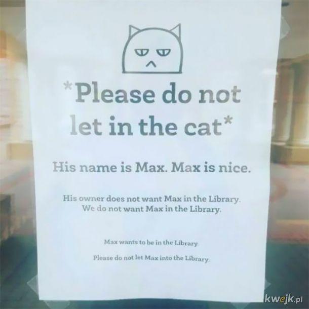 Kot Max