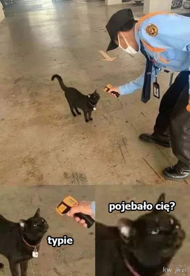 Oceniający kot