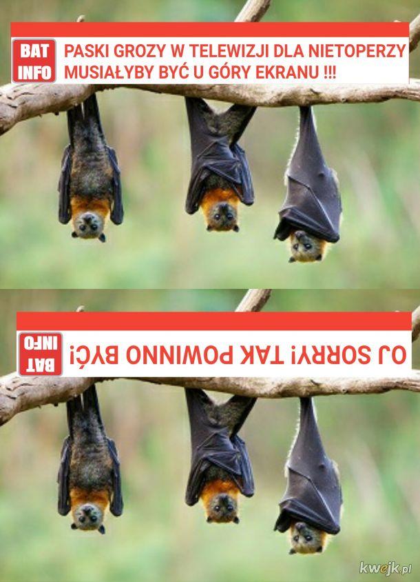 BAT INFO