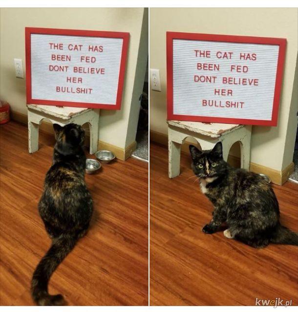 Wiecznie głodny kot