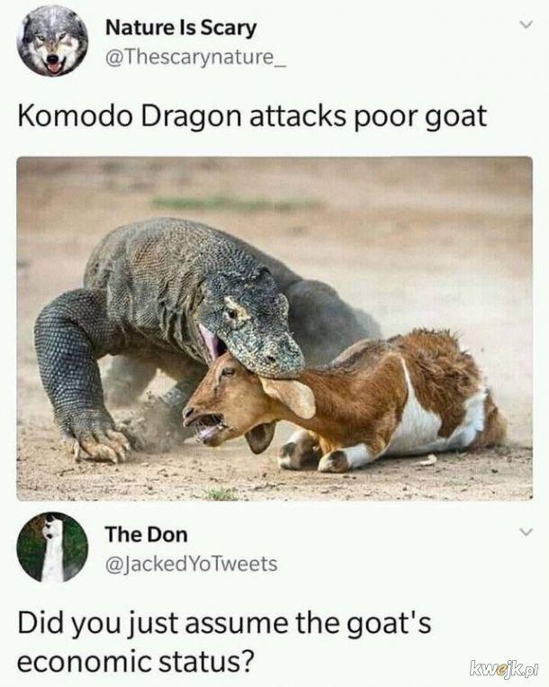 Biedna koza