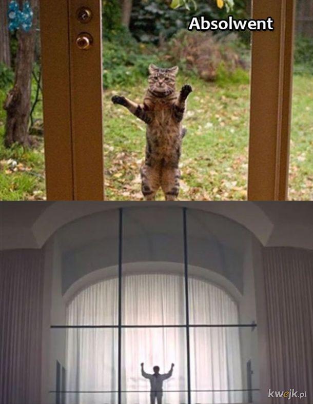 Koty odgrywają sceny z kultowych filmów