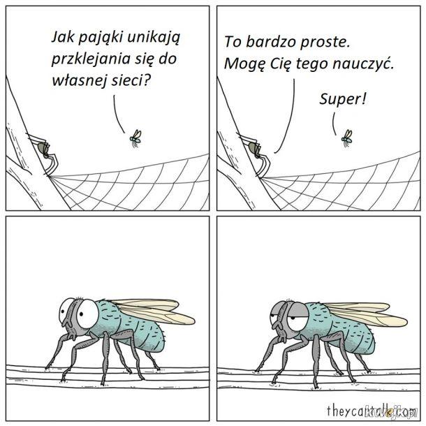 Pająk i mucha